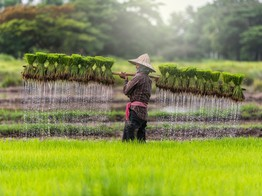 Oxfam Formally Launches Blockchain Platform for Rice Farmers in Cambodia image