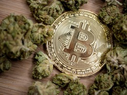 Adviser: Pot Stocks Will Mimic Crypto Boom - But Won't Crash Like Bitcoin image