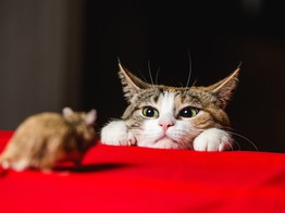 The Cat-and-Mouse Game of Crypto Regulation Enters a New Phase - CoinDesk image