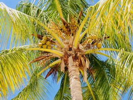 Coconut Tops Crowdfunding Target, Closes Securities Offer at £2.45 Million image