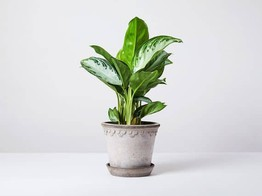 UK Modern Plant Shop Patch Raises More Than £1.8 Million on Crowdcube image