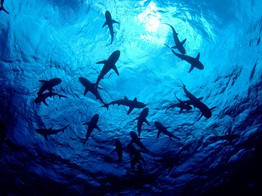 SharkPool Will Mine Empty Blocks for Altcoins to Elevate Bitcoin Cash's Status - NullTX image
