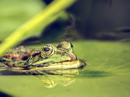 If You Kiss Enough VC Frogs, You'll Find a Prince | The Fintech Times image